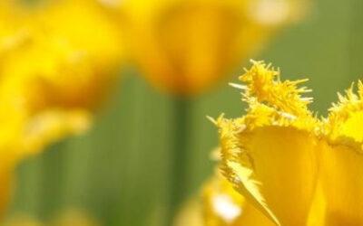 Tavaszi akció